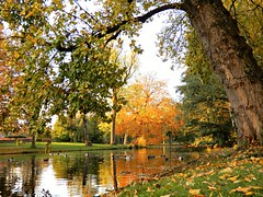 October Morning Colours (Clare-White) Tags: vondelpark light autumn nature reflections scenery