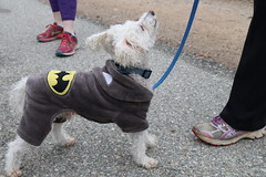 Woody (Webfoot5) Tags: dog dogs dogsonwalks dogzonwalkz miniaturepoodle