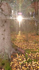 Forest Light (comedy_nose) Tags: forest helsinki flare finland sunlight