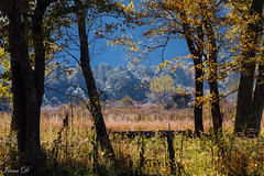 Morning in the Cove  HFF (Irina1010) Tags: fence morning light autumn grasses trees colors october 2018 beautiful cadescove canon smokey mountains outstandingromanianphotographers