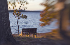 (amy20079) Tags: bench lake autumn sunset blur intentionalblur nikond5100 newengland maine trees fall mood shadows lensbaby