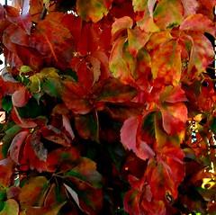 Autunno (dona(bluesea)) Tags: foglie leaves autunno autumn