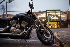 Harley Davidson - Fall Ride (coljacksg) Tags: harley davidson vrod fall ride salem oregon downtown salemcenter leaves