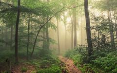 The Gate (Netsrak) Tags: baum bäume eu europa europe landschaft natur nebel wald fog landscape mist nature tree trees woods licht light eifel