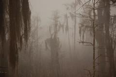 foggy-swamp-daniel-young (tanyapavlicapschyrembel) Tags: