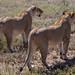 Safari Flickr (111 of 266)