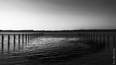 The empty jetty (floerioHH) Tags: 2018 water germany lake fujixseries pond monochrome blackandwhite schleswigholstein fujifilm sky jetty xt20 blackandwhitephotography landschaft ostholstein sw schwarzweis steg landscape
