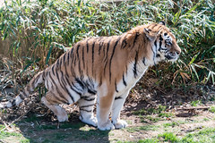 180323 National Zoological Park-08.jpg (Bruce Batten) Tags: animals businessresearchtrips locations mammals nationalzoologicalpark occasions plants shadows subjects terrestrial trips usa vertebrates washingtondc zoos