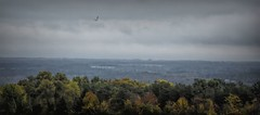 Cayuga Lake Valley (Jo Zimny Photos) Tags: 366the2016edition landscape cayugalakevalley hawk trees autumn colours sky cloudy