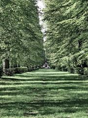 populierenlaantje (Mattijsje) Tags: landgoed gunterstein breukelen holland laantje beukenlaan oprijlaan gras groen grass green lane beech beeches bomen trees landscape landschap