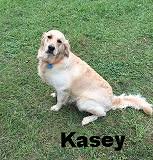 Kasey