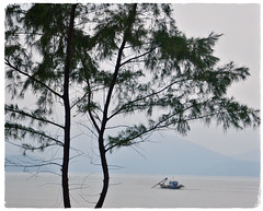 New Memories (The Spirit of the World ( On and Off)) Tags: vietnam asia southeastasia sea seascape southchinasea fishing boat fishingboat tree fog mist landscape travel paulbowles memories