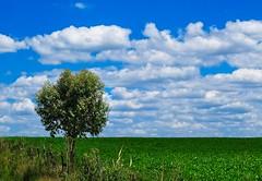 X10_DSCF5325_ON85 copy2 (A. Neto) Tags: x10 fujifilm color landscape tree countryside rural plantation sky skyline clouds nature