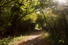 Country track | Rousham to Blenheim | Oxfordshire-1 (Paul Dykes) Tags: walking hiking countrytrack countryside oxfordshire england unitedkingdom gb uk october2018 autumnlight falllight woodstock