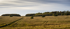 tracks and trees (HHH Honey) Tags: sony α7 sonyα7ii wiltshire salisburyplain landscape autumn autumncolours trees copse sonyf1450mmlens tracks byway