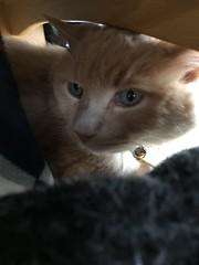 Norio's View (sjrankin) Tags: 12october2018 animal cat edited norio blanket bench under floor livingroom kitahiroshima hokkaido japan