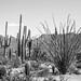 2018 Southwest US-221-Saguaro NP AZ