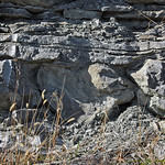 Seismite horizon (upper Fairview Formation, Upper Ordovician; Maysville West roadcut, Kentucky, USA) 40 thumbnail