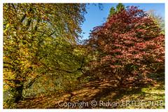 The autumn display at Stourhead Gardens - Wiltshire UK (R ERTUG) Tags: autumncolors stourheadgardens wiltshire stourton warminster uk nikon1635mmf40 nikond610fx rertug ertug