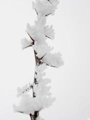 36317118 (aniaerm) Tags: snow ice frost