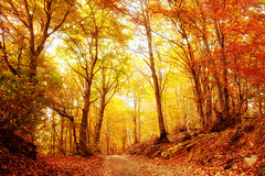 Foresta rossa (Marco Allegro) Tags:
