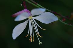 Herbst (K&S-Fotografie) Tags: flower outdoor makro macro colorful white red green yellow blume blatt