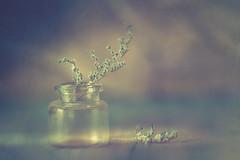 Limonium (Ro Cafe) Tags: edge80 lensbaby limonium stilllife closeup macroconverters simple vase blur naturallight sonya7iii textured