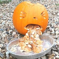 Not sure this is really necessary...... (markwilkins64) Tags: mobilephone humour badtaste funny markwilkins orange street halloween sick pumpkin vomiting