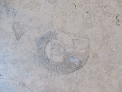 Friday, 21st, Ammonite IMG_6420 (tomylees) Tags: ammonite westfield stratford london september 21st friday 2018 project 365