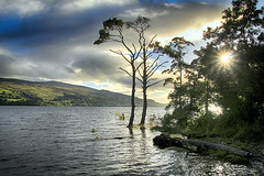 Loch Tay (OutdoorMonkey) Tags: water loch lochtay scotland lake tree trees pine shore shoreline lakeside perthandkinross sunlight sunshine evening outside outdoor countryside rural nature natural scenic scenery