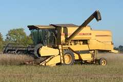 New Holland TX34 Combine Harvester cutting Spring Oil Seed Rape (Shane Casey CK25) Tags: new holland tx34 combine harvester cutting spring oil seed rape osr canola nh cnh yellow leamlara newholland grain harvest grain2018 grain18 harvest2018 harvest18 corn2018 corn crop tillage crops cereal cereals golden straw dust chaff county cork ireland irish farm farmer farming agri agriculture contractor field ground soil earth work working horse power horsepower hp pull pulling cut knife blade blades machine machinery collect collecting mähdrescher cosechadora moissonneusebatteuse kombajny zbożowe kombajn maaidorser mietitrebbia nikon d7200