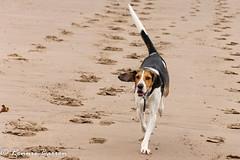which side of the tracks? (RCB4J) Tags: ayrshire clydecoast firthofclyde irvinebeach jakob rcb4j ronniebarron scotland sonyslta77v sonydt18250mmf3563 art babygrace dobermanterrier dogs photography play running sand sea siameselurcher trailhound