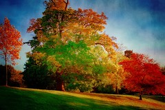 Like dreams ... (Julie Greg) Tags: park motepark nature nautre colours trees grass texture sky autumn autumn2018 tree england kent