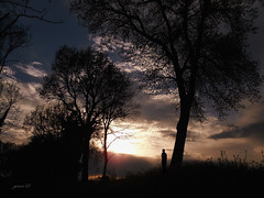 #Sometimes Bad Can Do Some Good (graceindirain) Tags: sunset silhouettes trees textured graceindirain