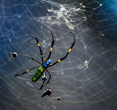 ThreeFingers (mehtab94) Tags: nature spider spiders summer fall wildlife natgeo scary halloween insect web cobweb colors garden