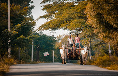 Dawn !! (Kaushik.N.Rao) Tags: sunrise colors luminous dawn bullockcart village nature outskirts beautiful landscape canon dslr photography travel incredibleindia iamk9 2k18 vignetting lightroom light