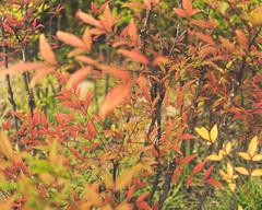Myeongdong (RW Sinclair) Tags: 2018 autumn ilce ilce7m2 korea seoul september a7 a7ii digital mk2 sony