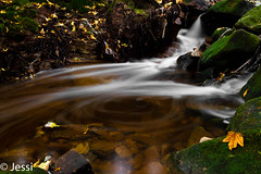 the vortex (Felicis_Flower) Tags: strudel swirl vortex water rock river waterfall forest wald plant pflanzen fall herbst steinbach saarland germany