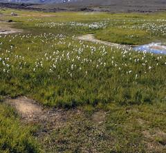 Hveravellir 68 (mariejirousek) Tags: hveravellir iceland