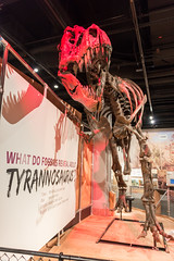 180324 Washington-16.jpg (Bruce Batten) Tags: animals businessresearchtrips dinosaurs locations museums occasions reptiles shadows subjects trips usa vertebrates washingtondc