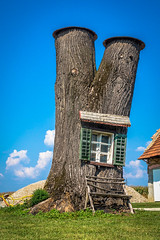 Some very interesting tree art in Croatia.