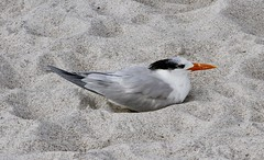 IMG_8444 (daveg.87gronk) Tags: beaches birds wildlife