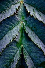 Serration (Stephen Reed) Tags: rhswisley autumn plants surrey england naturalbeauty nikon d7000 lightroomcc