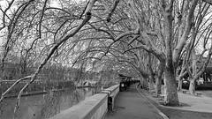 LIBREROS DE RIBERA DEL TIBER (CARLOS CALAMAR) Tags: tiber río rio river alameda arboleda rivera ribera paseo