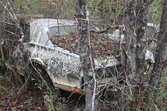 More Relics & Refugees (BennyPix) Tags: junkyard rust old classic vintage antique retro barkada wilmar ar drewcounty arkansas november 2015 © allrightsreserved unauthorizedusestrictlyprohibited allcommercialuseprohibited junk car auto automobile bennypix canon eos 50d 1968 mercury cougar