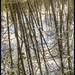 Soos Creek Reflection