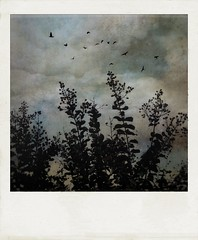 Autumn crepe myrtle. (jeanne.marie.) Tags: textured mydailywalk rainy clouds flight flying birds iphone7plus iphoneography silhouettes crepemyrtle autumn 100xthe2018edition 100x2018 image82100