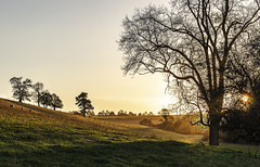 Simplicity (Wildlife & Nature Photography) Tags: rural field sunset grass sheep animals tranquil ruraltranquility nature outdoors england unitedkingdom peaceful reflective simplicity canon canon600d shadowsandlight light raysofsun raysoflight