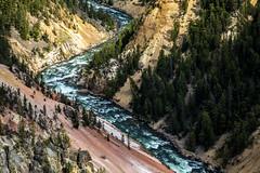 Yellowstone River from Inspiration Point (Bill in DC) Tags: wy wyoming yellowstone yellowstonenationalpark 2018 grandcanyonoftheyellowstone