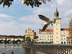 A view of Charles Bridge and Vltava river (Strunkin) Tags: prague czechrepublic vltava charles bridge